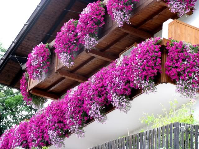 Fiori estivi per i balconi fiori